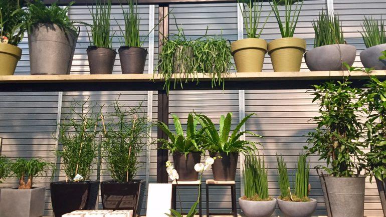 Garten- und Pflanzentrends 2017